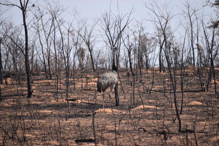 Zona devastada en Ñembi Guasu. Foto: Nativa