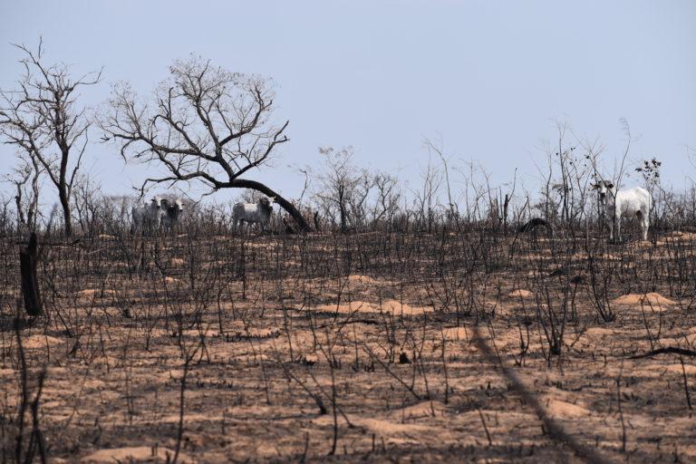 La Chiquitanía perdió cinco millones de hectáreas por los incendios forestales del 2019. Foto: Fundación Nativa.