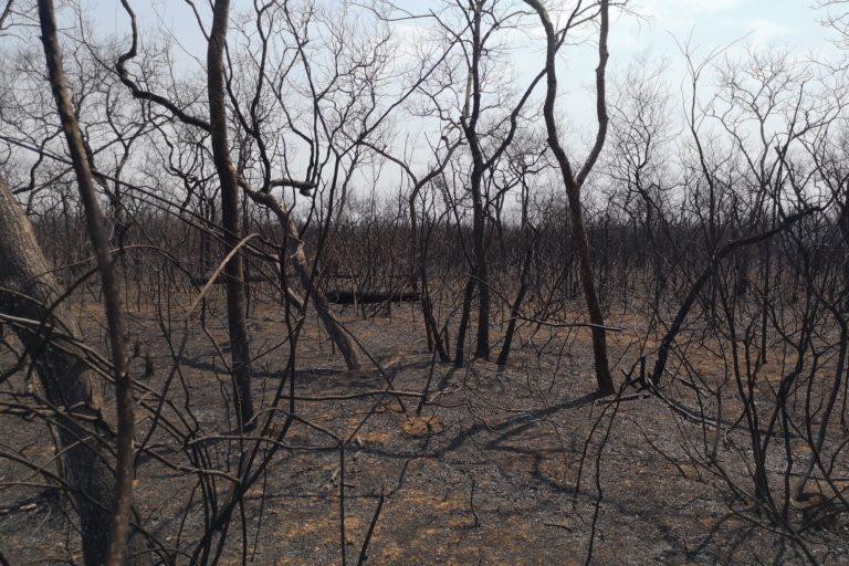 Los incendios forestales en Bolivia pusieron sobre la mesa el problema de la entrega de tierras para uso agrícola. Foto: Fundación Nativa.