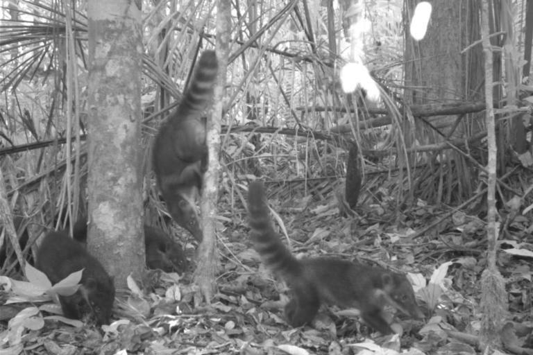 Comunidad de Shampuyacu colocó 24 cámaras trampa en los bosques de su territorio. Foto: Conservación Internacional.