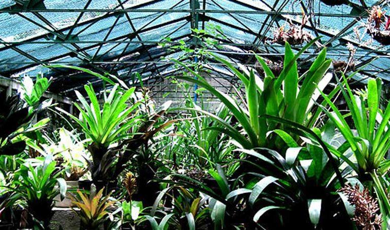 El Jardín Botánico de Caracas como solía verse antes de la crisis. Foto: Alejandro Matheus CC BY-SA 3.0.