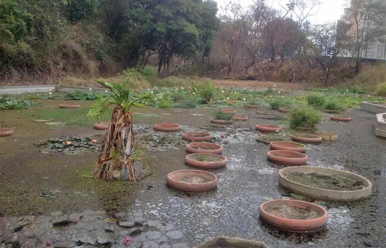 Miles de litros de agua se transportan con regularidad, normalmente a mano, para mantener las plantas de la laguna vivas, aunque muchas han muerto. Foto: Jeanfreddy Gutiérrez Torres.