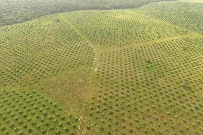 Palma de aceite en Colombia. Plantaciones de palma de aceite en Puerto Gaitán. Foto: Álvaro Avendaño.