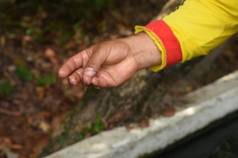 Palma de aceite en Colombia. Las comunidades aseguran que el agua está contaminada.Foto: Álvaro Avendaño.