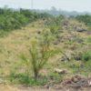 Los lugareños han comenzado a notar los drásticos cambios en los paisajes naturales, a causa de la siembra de la palma. Foto: cortesía Página Abierta.