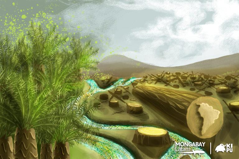 La ilustración para este especial ha sido trabajada por el equipo de Kipu Visual para Mongabay Latam.