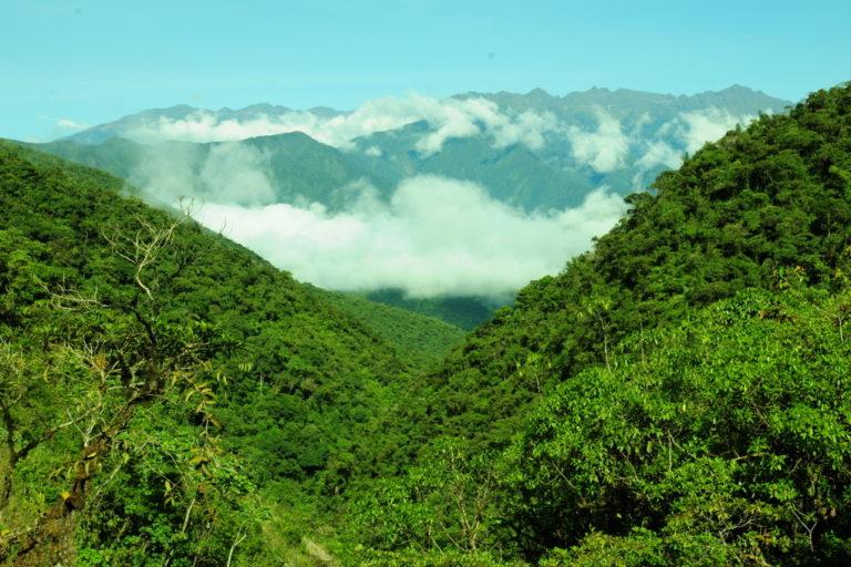 serpiente en bahuaja sonene La Cordillera de Carabaya, en Puno, es una zona donde se han descubierto varias especies nuevas para la ciencia. Foto: Alessandro Catenazzi.