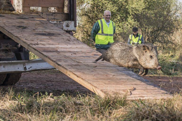 Uruguay recuperación de fauna autóctona