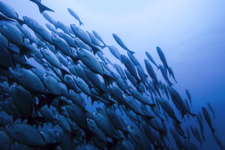 Conservación en Centroamérica. El 66 % de los océanos alterados de manera significativa. Foto: Nina Cordero.