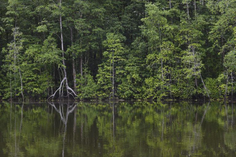Conservación en Centroamérica. Reducir la deforestación es una tarea primordial para la humanidad. Foto: Nina Cordero.