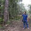 """Conservación de la selva maya. Ariel Alvarado, técnico forestal de Carmelita, una comunidad forestal de Petén, Guatemala, muestra un árbol que ha sido marcado como """"próxima cosecha"""", al no alcanzar el diámetro ideal para su corte. Foto: Jorge Rodríguez"""