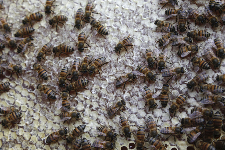 Conservación de la selva maya. Las comunidades alrededor de zonas protegidas como Calakmul y Balam Ki son las mayores productoras de miel orgánica en México. Foto: Jorge Rodríguez.