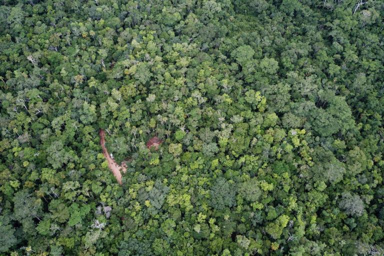 Conservación de la selva maya. Esta fue la primera zona de aprovechamiento trabajada por la comunidad de Carmelita. Después de 16 años de regeneración natural, el bosque no muestra señales de impacto negativo. Foto: Carlos Duarte
