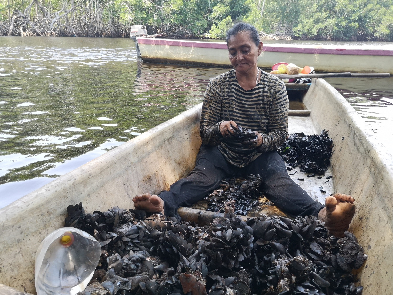 Conservación en Guatemala. Mujer limpia las conchas que recolectó de entre las raíces de los mangles y que venderá para su sustento. Foto: César J. Zacarías-Coxic/INAB.