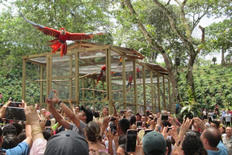 Conservación en Honduras. En junio de 2017 fue la quinta liberación. Por primera vez no se hizo en el parque arqueológico sino en una finca privada. Foto: Macaw Mountain.