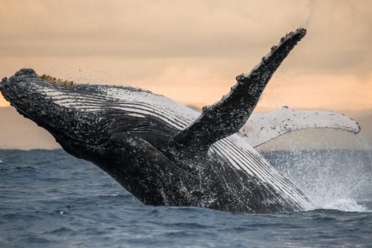 La creación de dos áreas protegidas marinas sigue en compás de espera. Foto: Oceana.