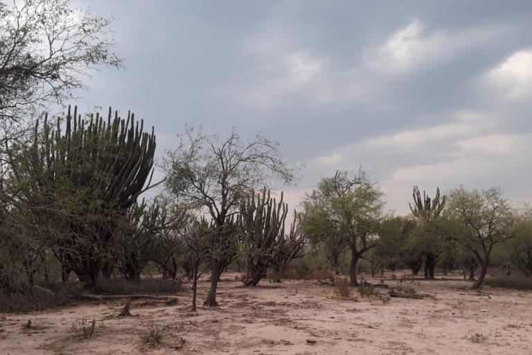 Compromiso Gran Chaco argentino