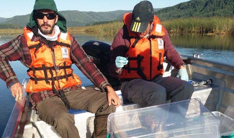 Científicos toman muestras de agua para extraer rastros de ADN de las especies que habitan en el humedal del río Cruces. Foto: Mario Soto.