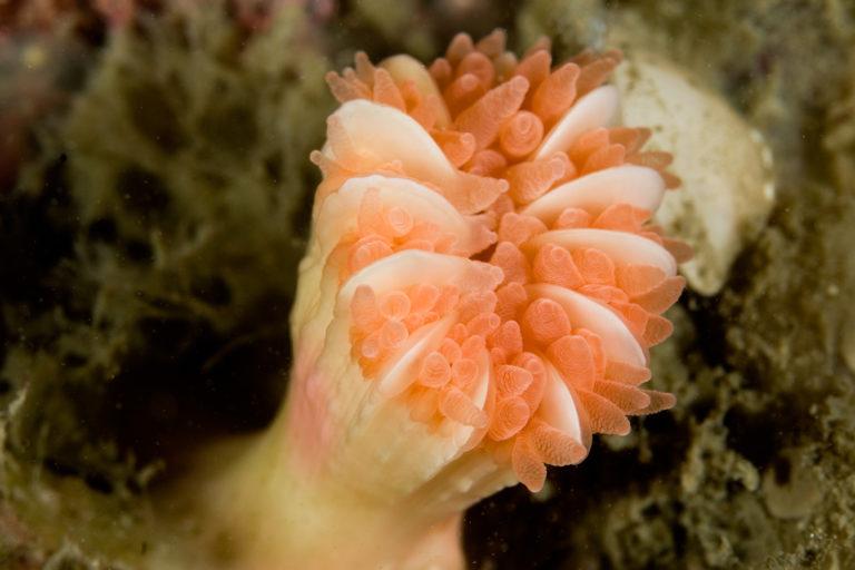 La Dorsal de Nasca es la nueva propuesta de área marina protegida en el sur de Perú. Foto: Oceana.