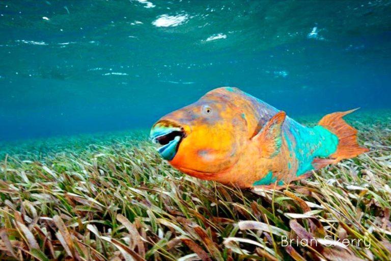 Cortesía Healthy Reefs/Brian Skerry