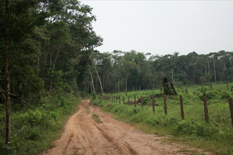 El mapeo de deforestación de Parques Nacionales Naturales sobre Sierra de La Macarena indica que la trocha ganadera ha sido un foco de deforestación importante desde su construcción en 2001. Foto: Rutas del Conflicto.