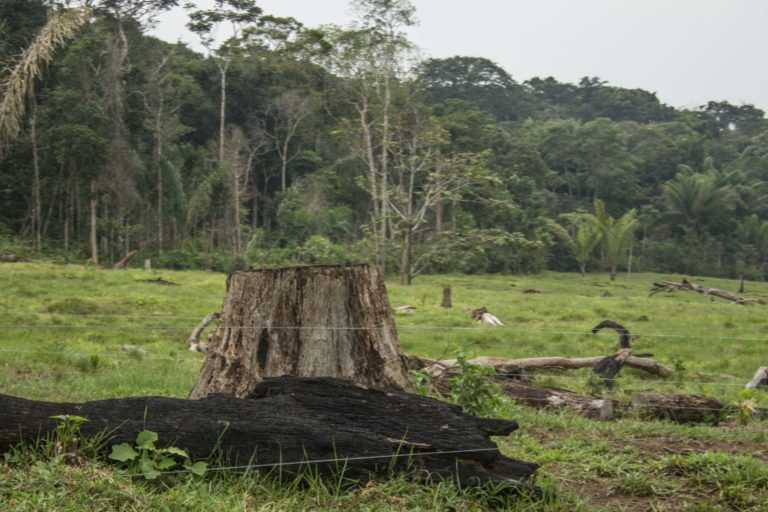Habitantes y líderes de la zona reclaman ver constantemente camiones con madera que sale del parque. Foto: Rutas del Conflicto.