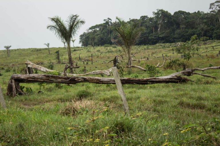 Árbol quebrado en su raíz, con muestras de quemaduras, en un predio deforestado. Foto: María Jimena Neira Niño.