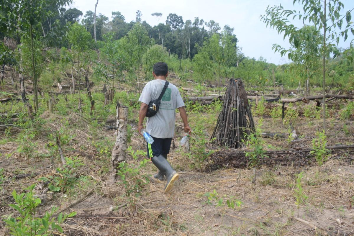 Pedro Herma en los cultivos de coca de Puerto Nuevo. Foto: Yvette Sierra Praeli
