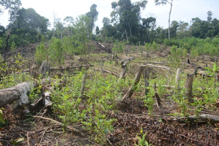 La comunidad nativa de Puerto Nuevo, en Huánuco, ha sido invadida con cultivos ilegales de coca. Foto: Yvette Sierra Praeli.