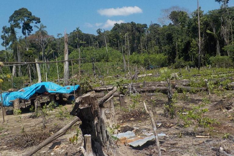 Bosque arrasado por invasores ilegales dentro de la comunidad nativa Puerto Nuevo. Foto: Pedro Herma.