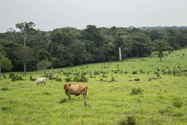 La deforestación con propósitos de ganadería en el PNN Cordillera de los Picachos se ha concentrado en el costado sur oriental del parque, donde se encuentra la entrada a las llanuras del Tinigua. Foto: Rutas del Conflicto.