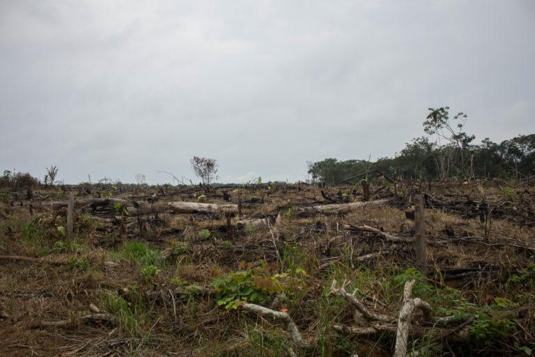 Expertos señalan que la deforestación masiva en la Cordillera de los Picachos podría desestabilizar el ciclo de aguas y lluvias en la Amazonía de todo el continente. Foto: Rutas del Conflicto.