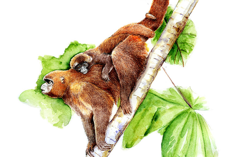La imagen del mono choro de cola amarilla del artista Óscar Vilca. Foto: Óscar Vilca.
