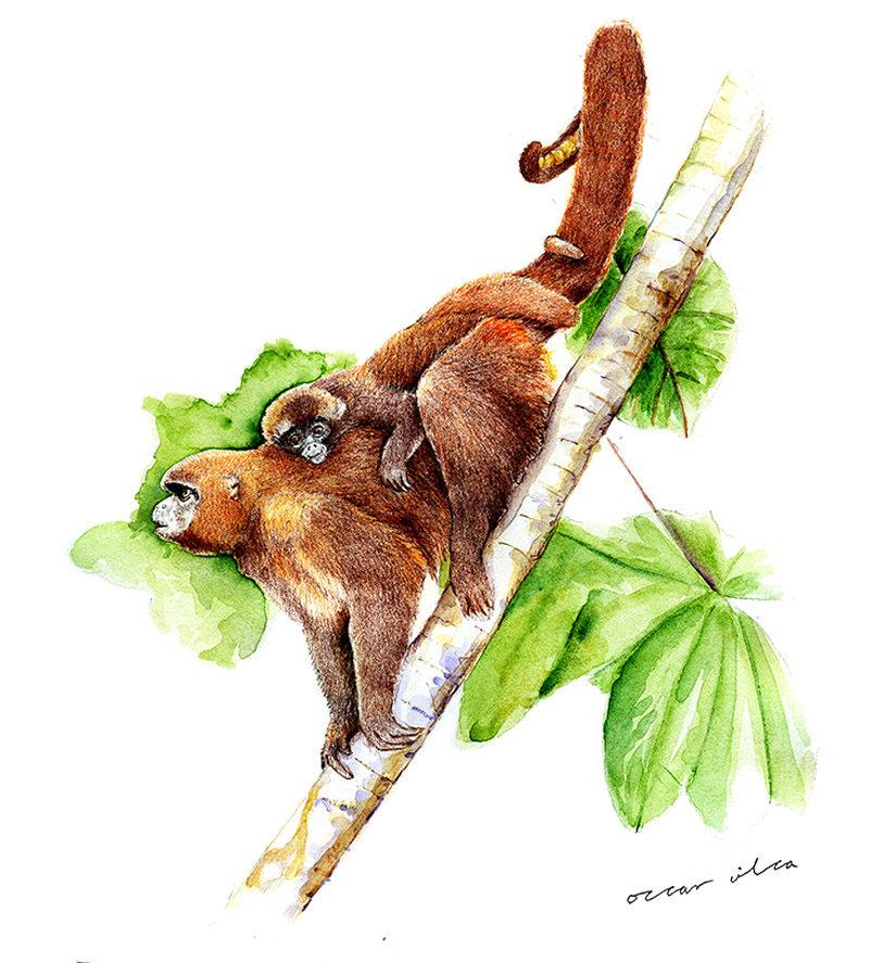 Las imágenes de Óscar Vilca han ilustrado gran parte de las publicaciones científicas peruanas. Foto: Óscar Vilca.