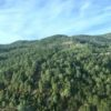 Bosques en Chihuahua