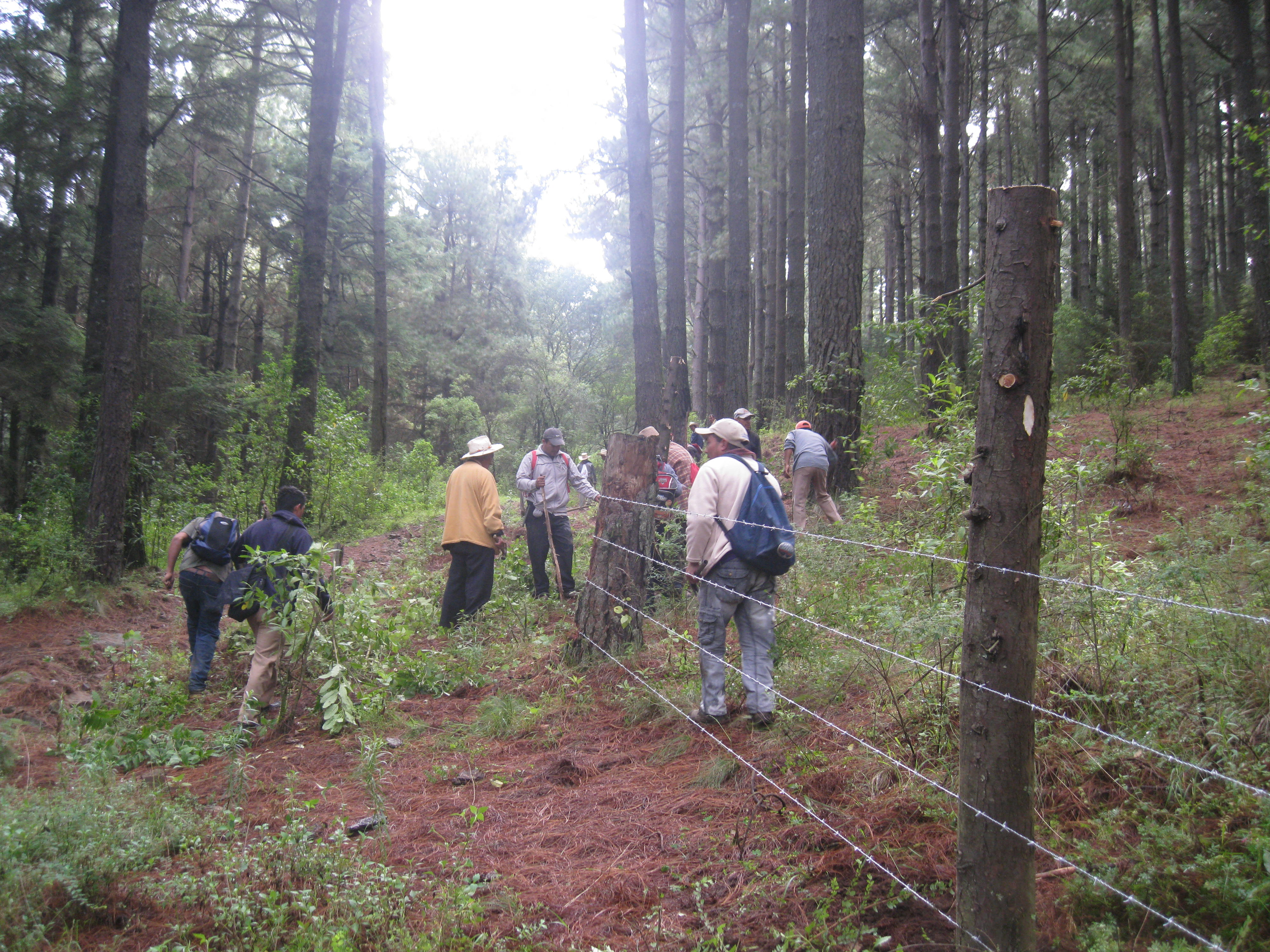 Manejo Forestal Comunitario-Edomex