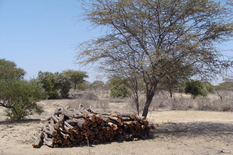 En la imagen se aprecia madera extraída de un bosque secos para ser usada como leña. Foto: Christian Devenish.