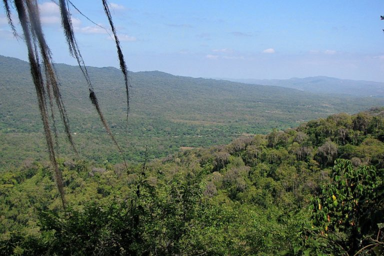 Bosques secos en el Parque Nacional Cerros de Amotape. Foto: Renzo Piana.