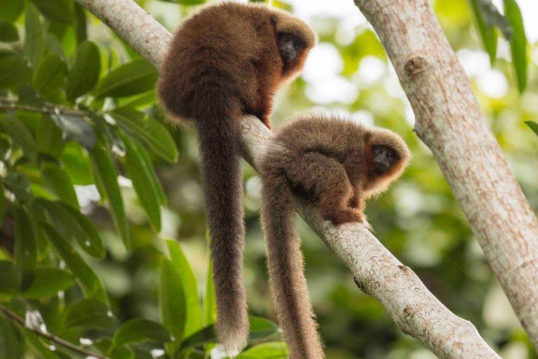 Día Mundial del Ambiente El Parque Nacional Madidi es uno de las más biodiversos del planeta. Foto: Robert Wallace.