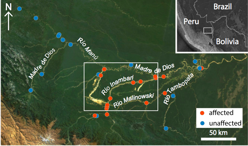 El mapa muestra las áreas definidas para el estudio de las imágenes satelitales. (Fuente: Universidad de Dartmouth / NASA).