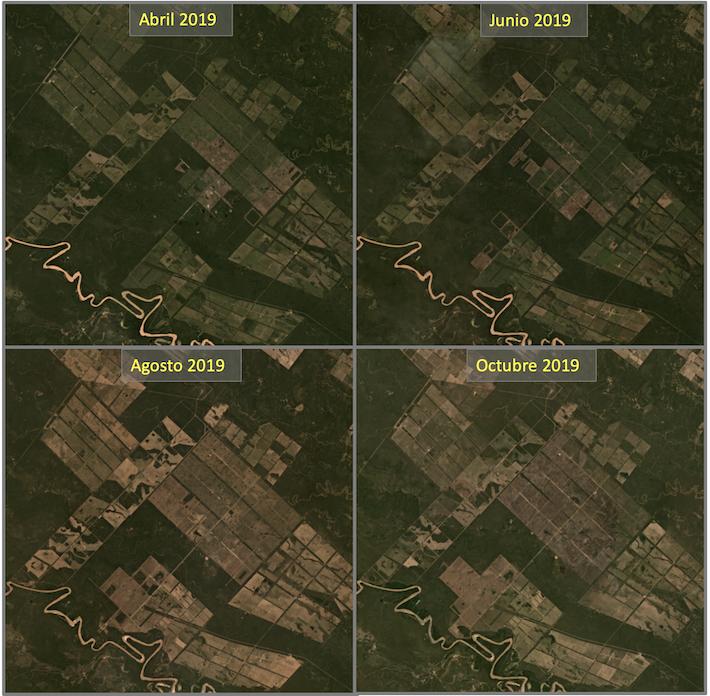 Las imágenes satelitales muestran una gran pérdida de bosque cerca del parque nacional, incluidas las áreas que se encuentran directamente al borde del río. Fuente: Planet Labs