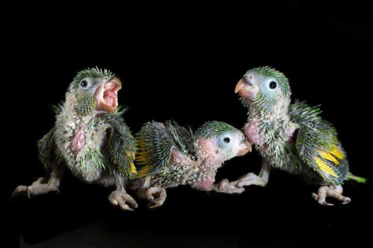 Bolivia crisis política refugio animales El Refugio Biotermal acoge alrededor de cien animales. Foto: Refugio Biotermal