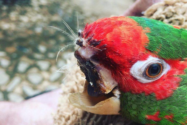Bolivia animales rescatados crisis politica La mayoría de los animales del centro Agroflori son aves. Foto: Agroflori.