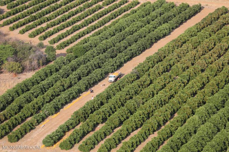 Campos de cultivo-plaguicidas