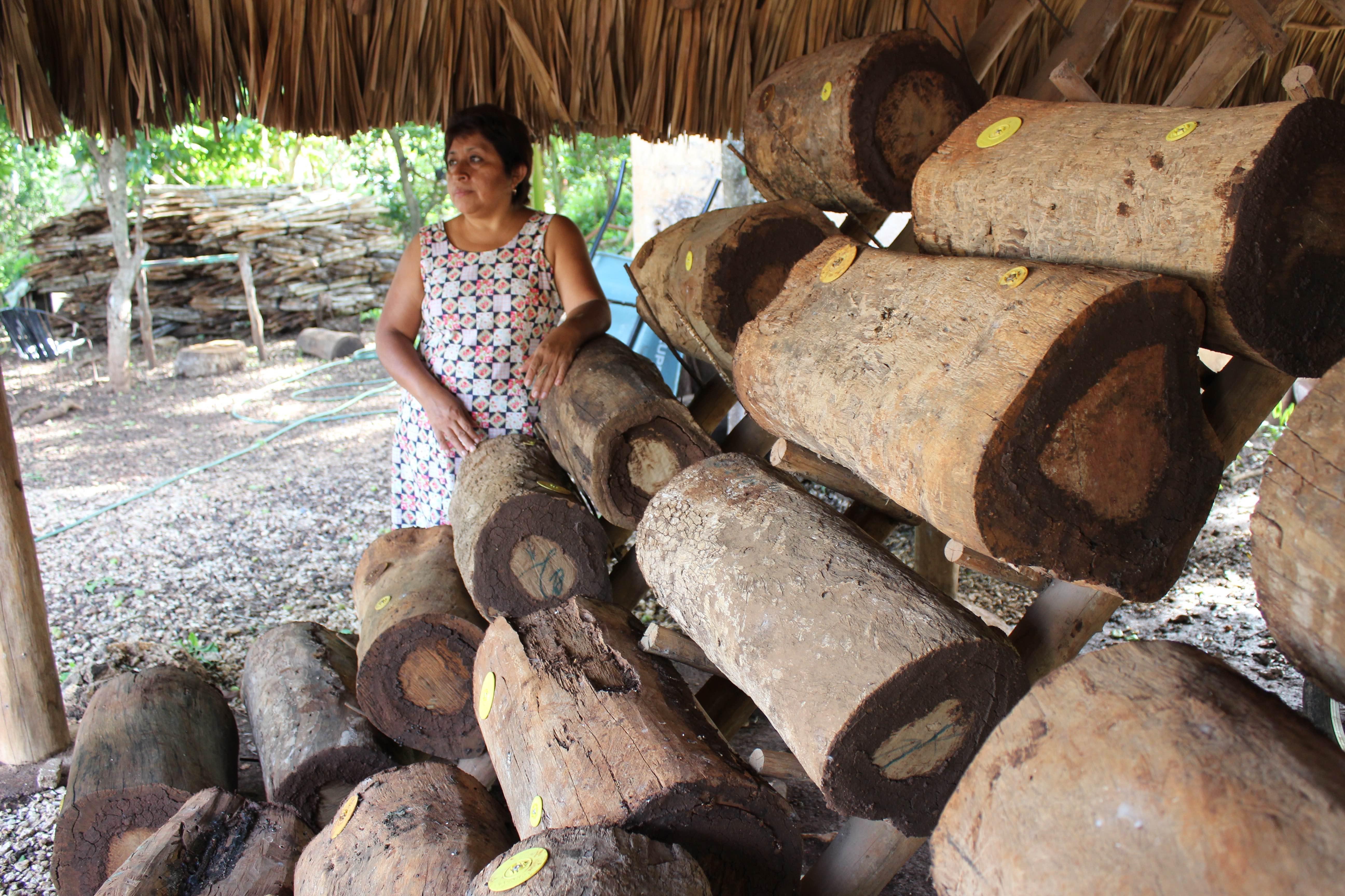 Abejas nativas-Campeche