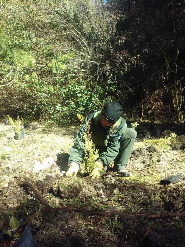 parque nacional los arrayanes argentina