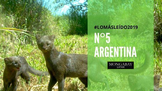 recuento ambiental argentina 2019