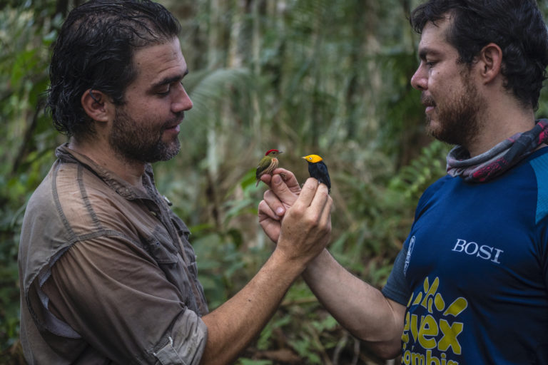 Observación aves Colombia. La pasión de Diego Calderón son las aves. Lleva más de 20 años dedicado a ellas y ha sido uno de los principales organizadores del Global Big Day en Colombia, evento en que el país es el campeón. Foto: Federico Ríos Escobar.