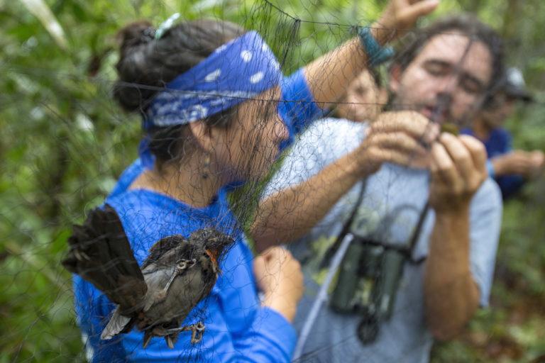Observación aves Colombia. Trabajo de campo en la expedición BIO Anorí. Foto: Robinson Henao.