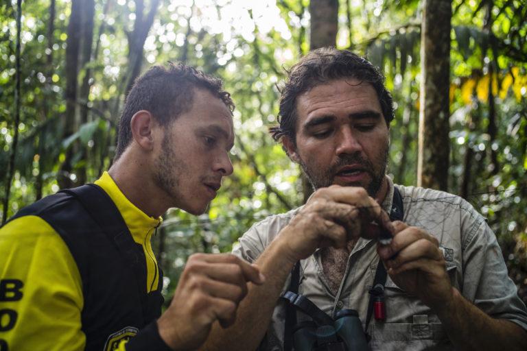 Observación aves Colombia. Revisando las redes de niebla en el expedición BIO Anorí. Foto: Federico Ríos Escobar.